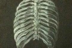 anatomyribcage605k